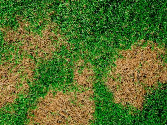 How To Tell If You Have Lawn Fungus